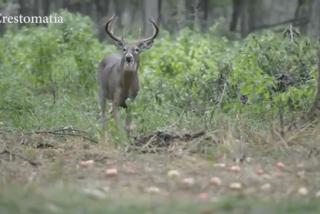 ¡Alerta! La enfermedad mortal del ciervo 'zombi' podría propagarse a los humanos