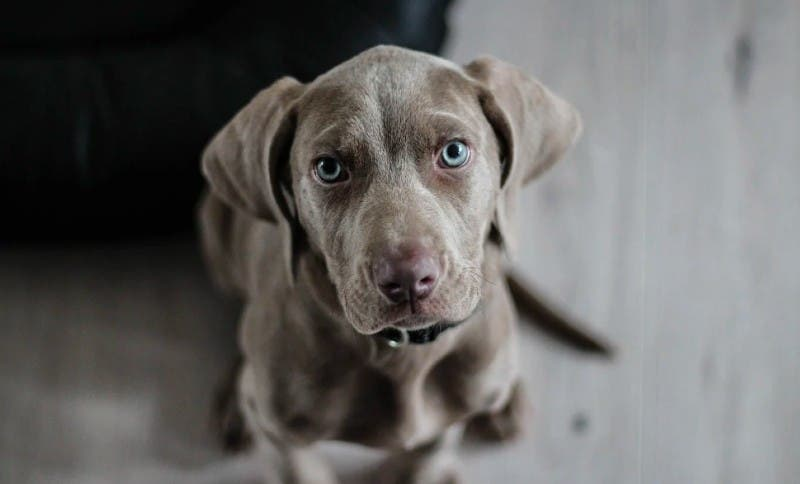 China: celebran la polémica 'feria anual de carne de perro', en plena pandemia del COVID-19