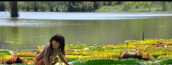 El Sínodo para la Amazonía se celebrará en Roma del 6 al 27 de octubre