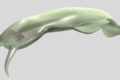 'Amiskwia', el extraño gusano que finalmente obtiene su lugar en el árbol de la vida