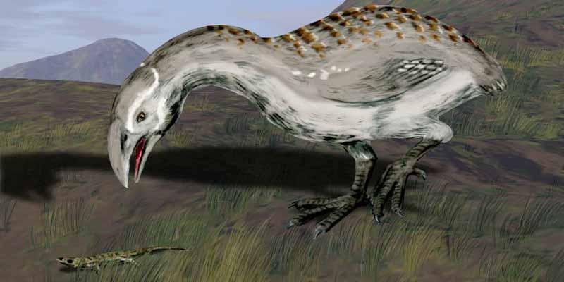 El aptornis, un ave gigante extinta en Nueva Zelanda, eran originarios de Africa