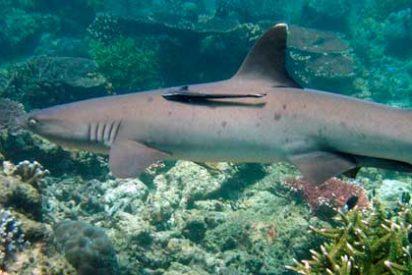 Lugares más remotos del mundo: Arrecife Tubbataha, Filipinas