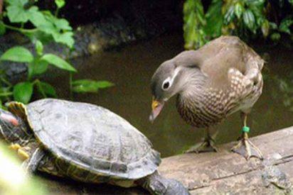 'Scientific Reports': Aves y reptiles compartían nidos hace 70 millones de años