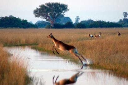 Vuelos baratos a Botsuana