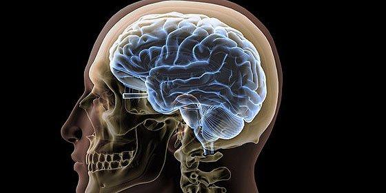 Una proteína cerebral crucial para la recuperación tras un derrame cerebral