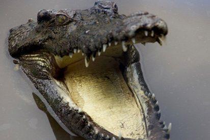 Fuertes inundaciones en Australia traen cocodrilos a las calles