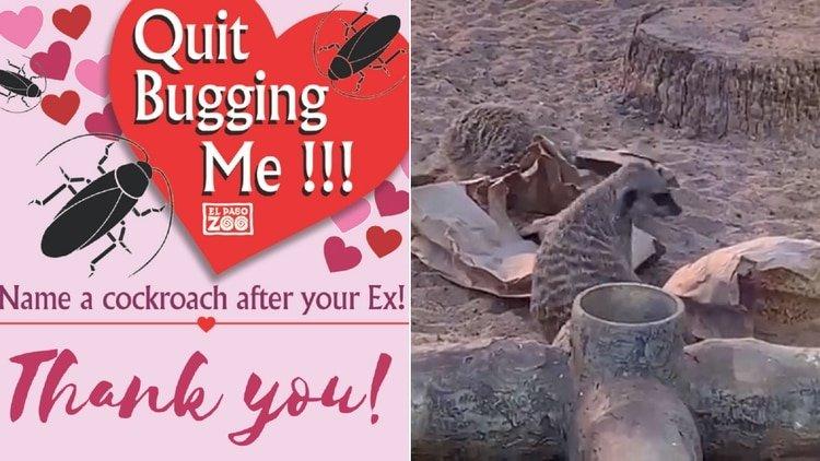 ¿Odias San Valentín?: Un zoológico crea una asquerosa campaña para recordar a los ex