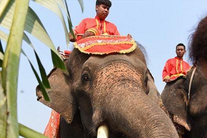 Una chica se abraza a la trompa de un elefante y se desata el caos