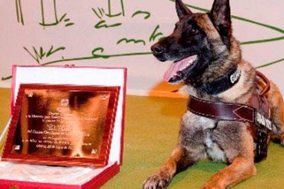 El adiós al perro Guardia Civil que buscó a Diana Quer, Gabriel Cruz o Marta del Castillo conmueve Twitter