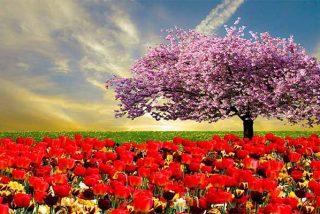 Mitzy Capriles de Ledezma: Las primaveras