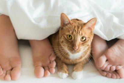 Los gatos asumen el carácter de sus dueños incluidos sus problemas emocionales