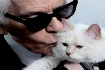 'Choupette', la gatita de Karl Lagerfeld, heredará parte de su inmensa fortuna