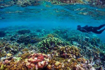 Islas Salomón: Uno de los mejores destinos de buceo del mundo