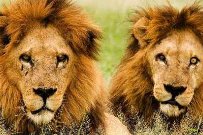 Piden incluir la vida social de los animales en su conservación