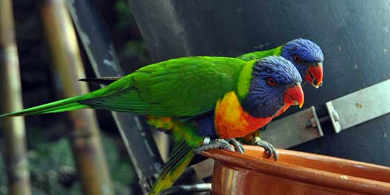 Loro Parque, reconocido como el zoológico número uno del mundo