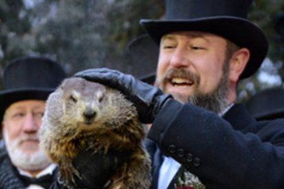 La marmota Phil vuelve a 'predecir' una temprana llegada de la primavera a EE.UU.