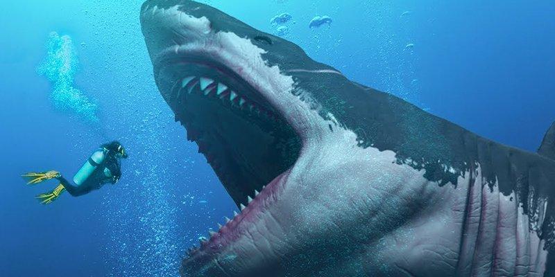 Este es el verdadero tamaño de un Megalodón prehistórico