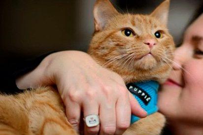 ¡Tener gato es muy peligroso para tu salud!