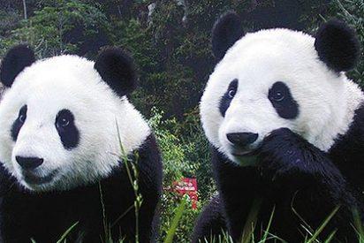 Humanos y animales comparten los mismos mecanismos de altruismo hacia la pareja