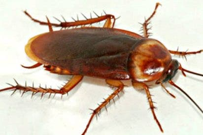 ¿Sabes por qué hay cada vez más cucarachas y moscas al tiempo que se extinguen las mariposas y las abejas?