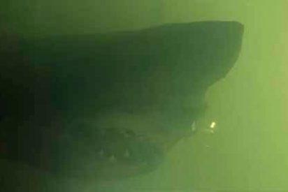 La inmensa e inesperada criatura que se encontraron al visitar un parque acuático abandonado