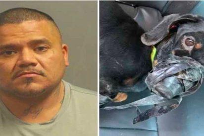 Detenido un facineroso por amordazar con cinta americana a su perro y tirarlo a la basura