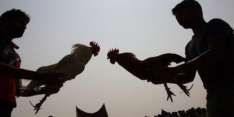 """Rafael López Charques: """"Pelea de gallos"""""""