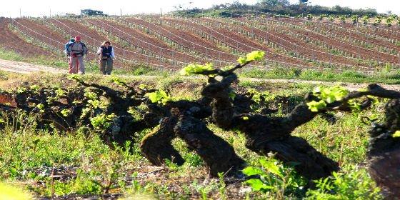 Ruta del Vino del Bierzo... lo tiene todo