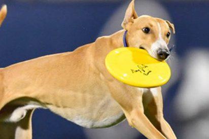 Este perro sale al campo de juego en el entretiempo y atrapa un pase de 76 metros