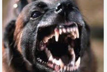 Encuentran el cadáver de un hombre con la cabeza arrancada del cuerpo por su sanguinario perro