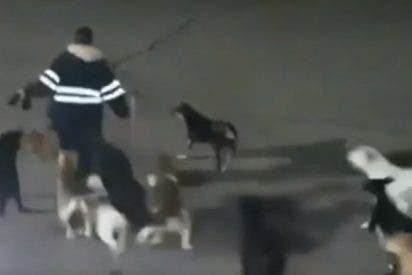 Una jauría de perros despedaza a una mujer en plena calle