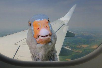 Así es el nuevo reto viral: Crear la ilusión óptica de un viaje en avión mediante los objetos más inesperados