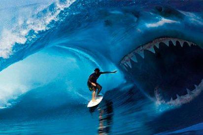 ¡Un tiburón ataca a un surfista por imprudente!