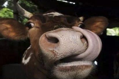 ¿Sabías que la carne vegana de laboratorio no es mejor para el cambio climático que la de verdad?