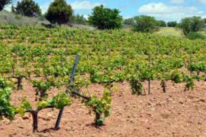 Ruta del Vino Arlanza, Esencia de Castilla