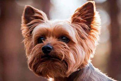 El perro fiel salva al anciano dueño que cayó a un profundo barranco