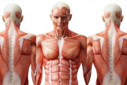 Estas son las 5 partes de nuestro cuerpo que hasta hace poco no sabíamos que teníamos