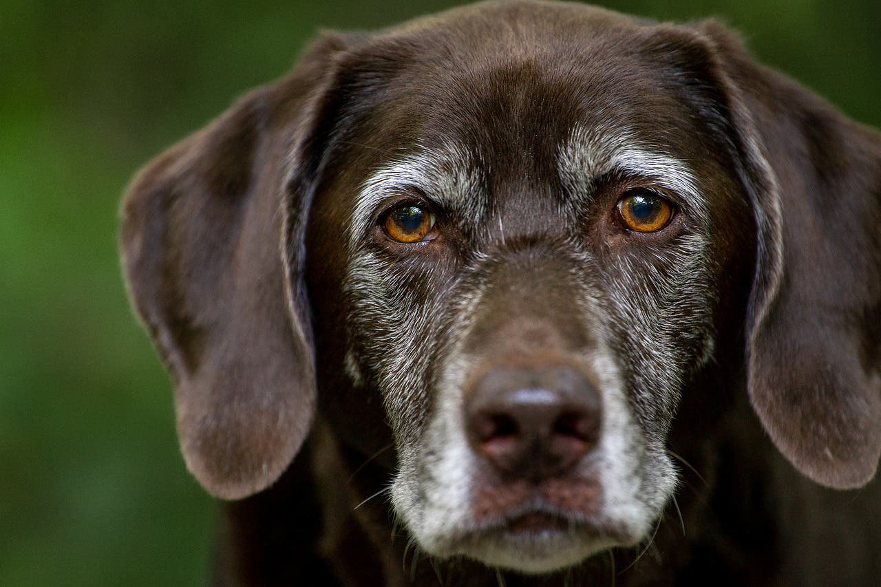 'Overtoun': Resuelto el misterio del puente al que van a suicidarse los perros
