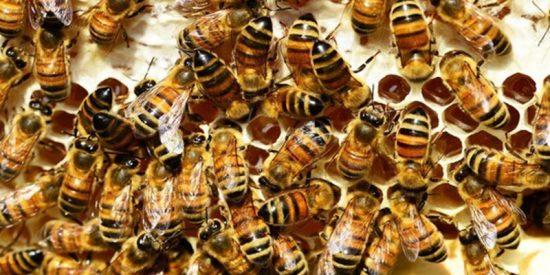 Futuro: Robots ponen en comunicación a abejas y peces