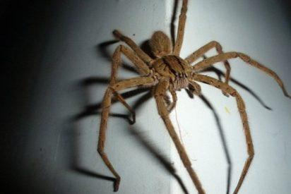 Momento en el que una araña gigante se cuela en el maletero de un coche