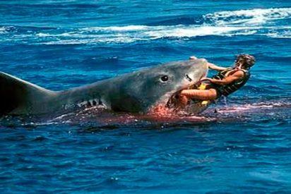 ¿Sabes por qué han aumentado los ataques de tiburones a humanos?