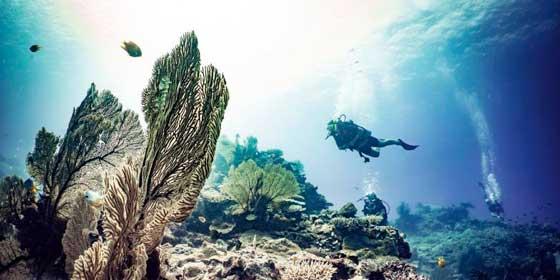 Todo lo que debes saber si vas a practicar submarinismo
