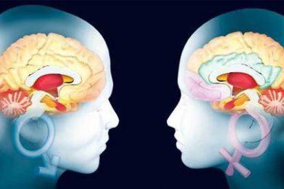 Cerebro Humano: Hasta los 90 años siguen naciendo nuevas neuronas