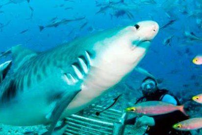 Buceando con tiburones en las Islas Fiji