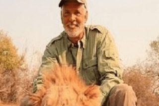 Los cazadores se avergüenzan de este idiota que mató a un león dormido