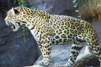 Qué ver y hacer en la Amazonía colombiana