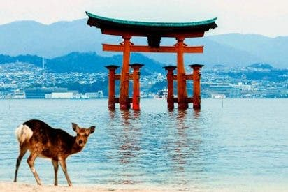 ¿Cuál es la mejor época para visitar Japón?