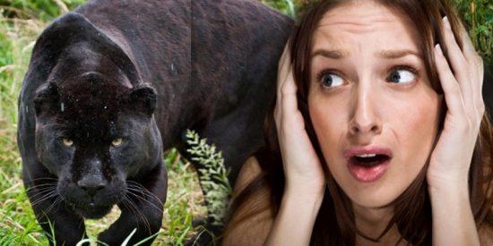 Una chica es atacada por un jaguar tras saltar una valla del zoológico para tomarse un selfie