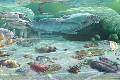 Un yacimiento con fósiles de decenas de nuevas especies de la 'explosión del Cámbrico'