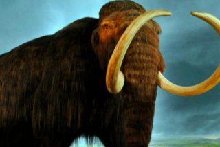 Logran reactivar células de un mamut de hace 28.000 años